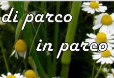 parco in parco